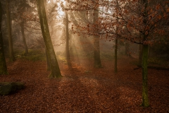 luzern_wald-065e7-c296c
